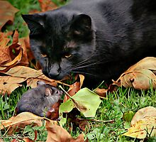 CAT MEETS RAT by Sandy Stewart