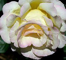 Delicate Pink by Deborah  Benoit