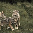 Three Grey Wolves by EdgeOfReality