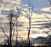 Cloudy Day  by Vonnie Murfin