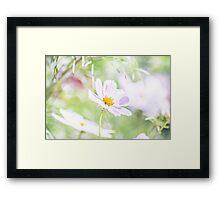 Pastel Spring Daisy Framed Print