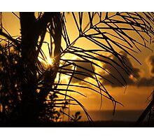 """Palm Morning"" Photographic Print"