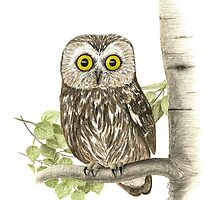 Saw Whet Owl by Heather Ward