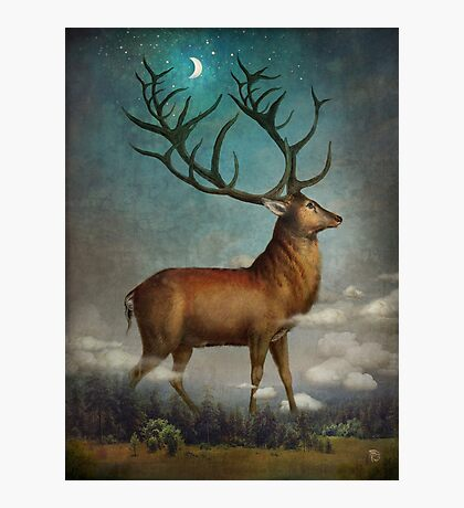 King of the Night Photographic Print