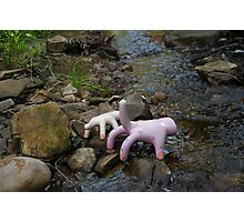 Genetically modified hands in the wild. Photographic Print
