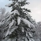 Great Snowy Tree by Brad & Melanie LaFrenier