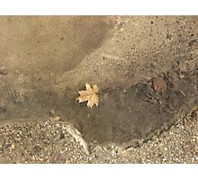 Leaf in a Spring Puddle Photographic Print