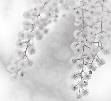 Winter Romance by Aaron  Sheehan