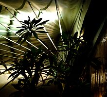 Bamboo Fan - Sihouette 05 by tano