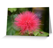 Red Fuzz! Greeting Card