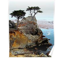 The Lone Cypress At Pebble Beach Poster