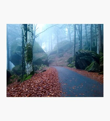 Mountain road in the wood on November Photographic Print