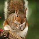squirrel 2 by Roger  Barnes