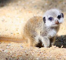 My mum said I'm really cute.......... by jdmphotography