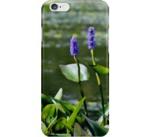 Pickerelweed II iPhone Case/Skin