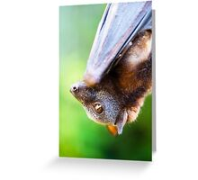 Little red Flying-fox Greeting Card