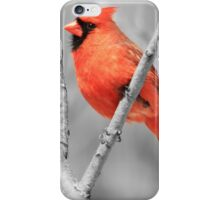 Male Cardinal Selective Coloring iPhone Case/Skin