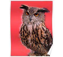 Luna, the owl. Poster