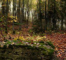 Fall Time by Gino Caron
