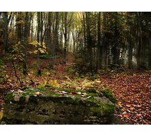 Fall Time Photographic Print