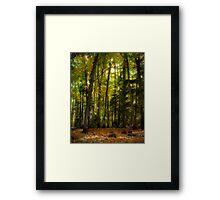 Colorful Underwood Framed Print
