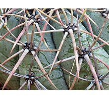 New Mexico Cactus Photographic Print