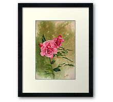 Irish Roses Framed Print