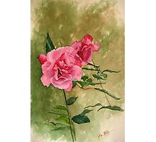 Irish Roses Photographic Print