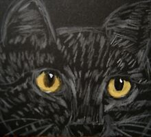 EYES OF THE CAT - COLORED PENCIL AND ACRYLIC DRAWING by librapat
