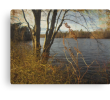 Sweet Gold Canvas Print
