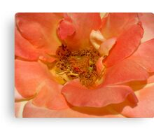 Pinky Peach Canvas Print