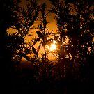 Sundown by dozzie