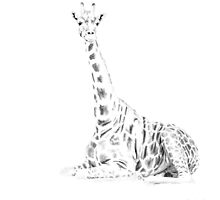 Silhouette giraffe by Sandra Johnston