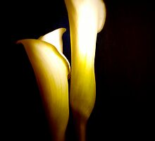 Two Elegant Calla Lily Flowers Against Black   by Linda Matlow