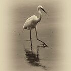 White Heron by Dianne English