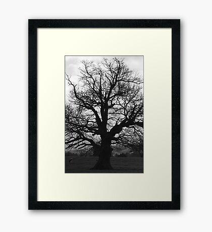 Terrara Tree #2 Framed Print