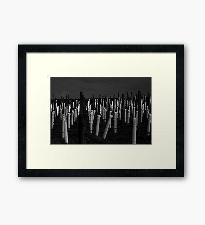 Vinyard Patterns Framed Print