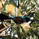 Tui by Faith Barker Photography