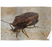 Brown bug Poster