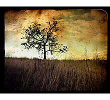 Memory Of Trees Photographic Print