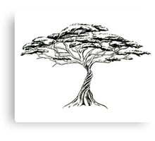 Whistling Thorn , Zen Bonsai African Tree Black and White Canvas Print