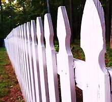 White Picket Fence by Diana Forgione