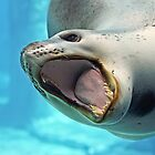 Leopard Seal by David Smith