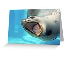 Leopard Seal Greeting Card