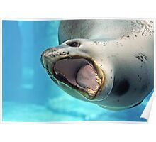 Leopard Seal Poster