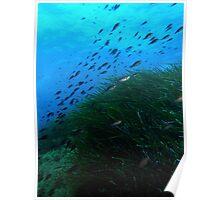 Underwater Medow Poster