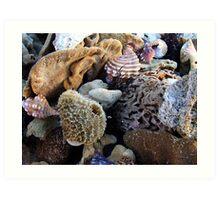 """""""Sponges and Shells"""".. Art Print"""