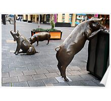 Rundle Mall Pigs Poster