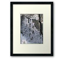 Penguin Footprints Framed Print