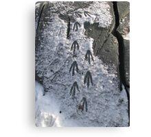 Penguin Footprints Canvas Print